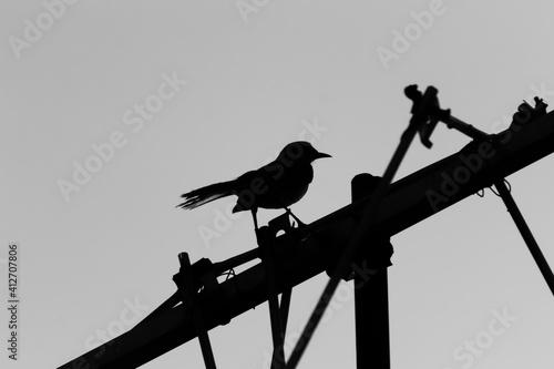 Obraz na płótnie bird on a wire