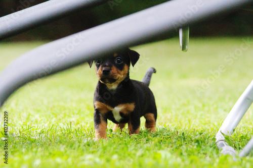 Fotografie, Tablou Dog Sitting On Grass