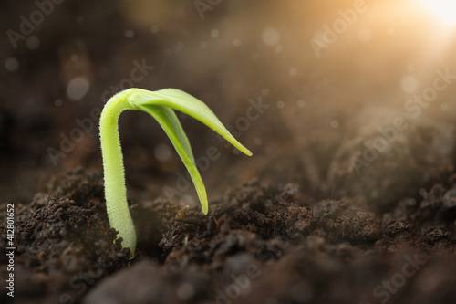 Obraz A small plant sprouting out of the soil illuminated by sunlight - fototapety do salonu