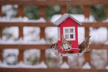 A Flock Of Sparrows Next To A House-shaped Feeder In The Garden In Winter