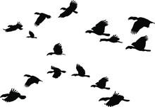 A Flock Of Flying Wreathed Hornbill Birds. Vector