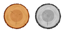 Tree Trunk Rings Cut Isolated Close Up Vector Cartoon Illustration Set, Black And White And Brown Colorful Wooden Stump Slice