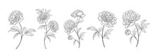 Set Of Differents Peony Decoration On White Background