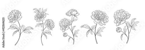 Fotografie, Obraz set of differents peony decoration on white background