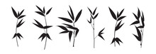 Set Of Differents Bamboo Branch On White Background.