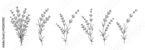 Photo Set of differents lavender on white background.