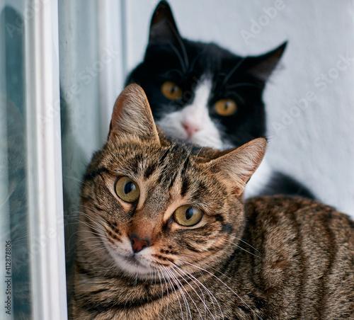 Fototapeta Selective focus shot of two beautiful cats