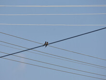 Two Swallows On The Wire  Among Many Wires With Sky Background