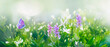 Leinwandbild Motiv Purple butterfly flies over small wild white flowers in grass in rays of sunlight. Spring summer fresh artistic image of beauty morning nature. Selective soft focus.