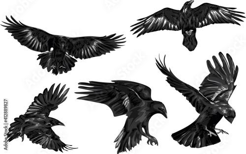Set of high quality ravens - vector art Fototapeta