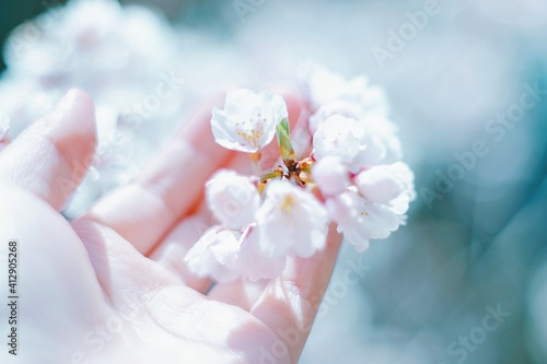 Fototapety, obrazy: Close-up Of Hand Holding White Flowers