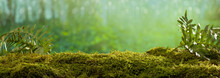 Close Up On Moss In Forest, Background Blurred Bokeh