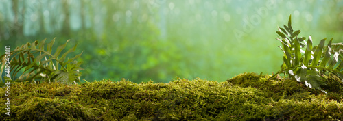 Close Up on moss in forest, background blurred bokeh - fototapety na wymiar