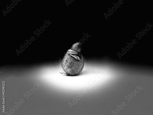 Photo une pomme de terre avec des germes