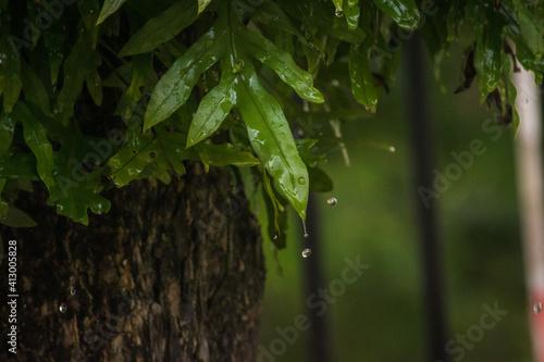 Obraz na plátně Close-up Of Raindrops On Tree Trunk