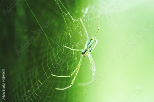 Close-up Of Spider On Web Fototapeta
