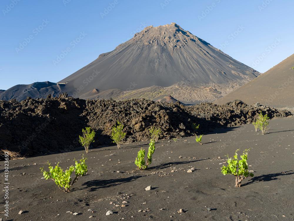 Fototapeta Traditional viniculture in the Cha de Caldeiras, . Stratovolcano mount Pico do Fogo. Fogo Island (Ilha do Fogo), part of Cape Verde.