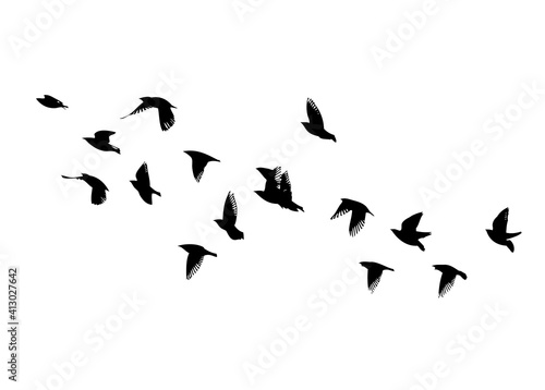 Carta da parati A flock of flying birds. Vector illustration