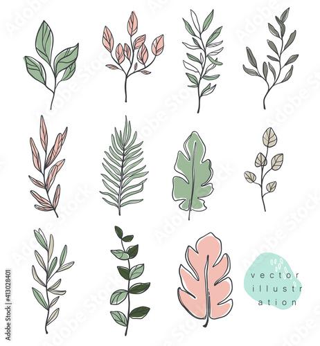 Fototapeta Vector hand drawn illustration , leaves and branches. Minimalistic line art obraz