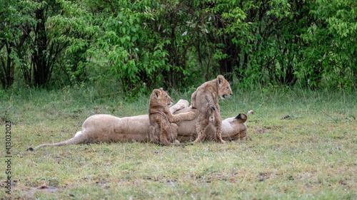 Obraz na plátně Africa, Kenya, Maasai Mara National Reserve