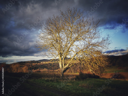Fototapeta Beautiful shot of thistles and a tree in an agricultural landscape in Auvergne-R