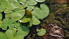 Close-up High Angle View Of Lily Pads
