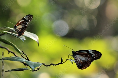 Photo Close-up Of Butterfly Perching On Flower