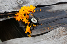 High Angle View Of Yellow Flowers On Tree Stump