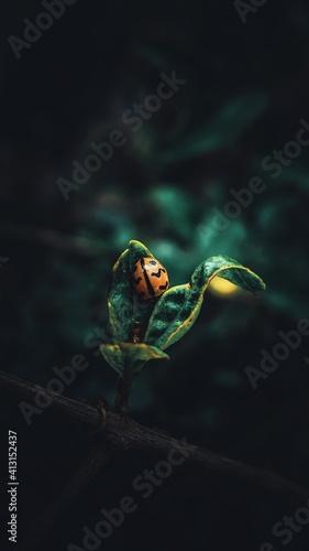 Fototapeta Close-up Of Ladybird On Plant obraz