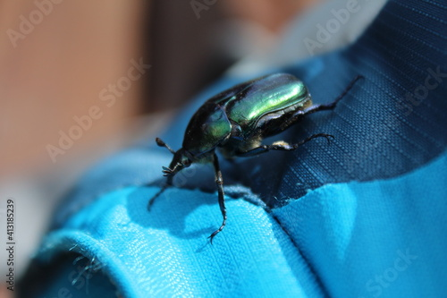 Foto Close up of a beetle walking on a blue bag