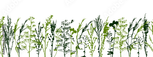 Canvas Seamless border with wild herbs - fresh grass isolated on white - green plants -