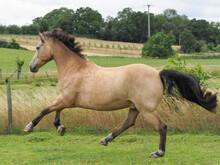 Playing Dun Horse