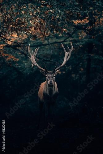 Obraz na plátně deer in the forest