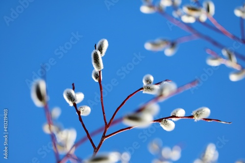 Fototapety, obrazy: Low Angle View Of White Flowering Plants Against Blue Sky