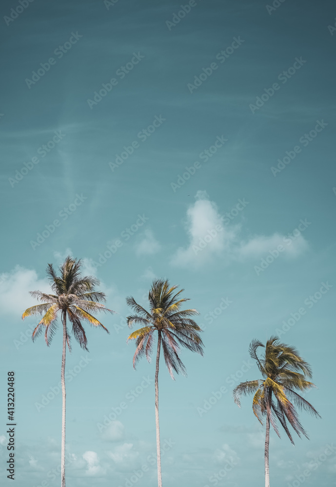 Fototapeta Tropical palm tree with blue sky and cloud abstract background. Summer vacation and nature travel adventure concept.