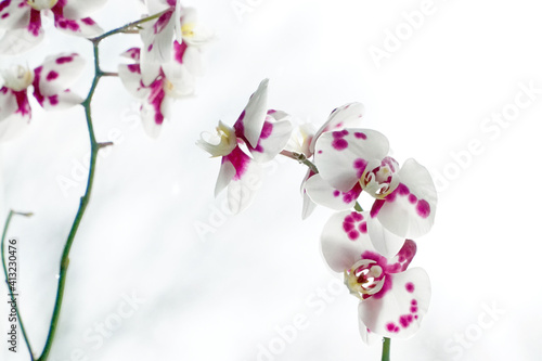 Fototapety, obrazy: Close-up Of Pink Cherry Blossom