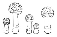 Collection Of Vector Fly Agaric Mushrooms Without Background.