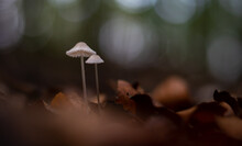 Group Of Small Mushrooms In The Forest During Fall Season