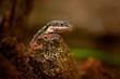 Reptile_3