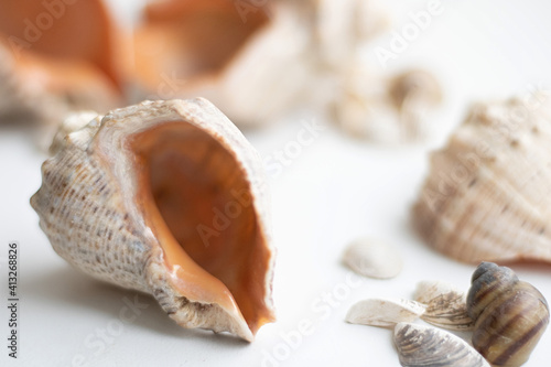 Canvas Print Seashell background, lots of different seashells piled together