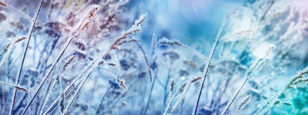 Fototapeta frozen plants in winter