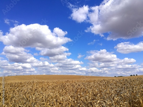 Stampa su Tela Crop Fields On Sunny Day With Blue Sky And Clouds