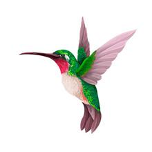 Hummingbirds Isolated. Trendy Vector Print