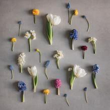 Angeordnete Blumenstängel Von Frühlingsblumen Auf Grauem Untergrund