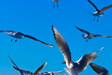 Birds In The Sky. In The Photo, Gulls Flying Against The Blue Sky, Close-up