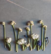 Viele Blumenstängel Liegen Angeordnet Auf Einem Grauen Untergrund - Frühlingsblumen