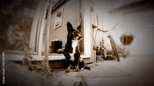 Fotografie, Obraz Dog Sitting In Courtyard