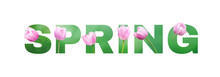 Spring Lettering Isolated On White Background