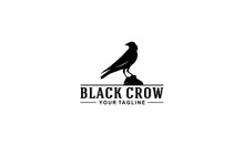 Black Crow Logo With Illustration Of A Crow On A Rock Observing Something