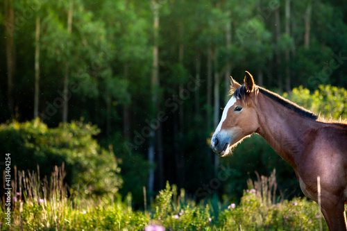 Slika na platnu horse in the meadow